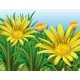 Yellow Flowers in the Field - GraphicRiver Item for Sale