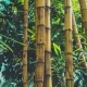 Bamboo Forest Background - VideoHive Item for Sale