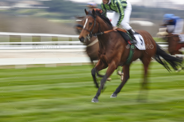 Horse race final rush. Competition sport. Hippodrome. Winner. Speed background  - Stock Photo - Images