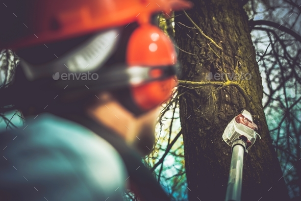 Taking Care of Trees - Stock Photo - Images