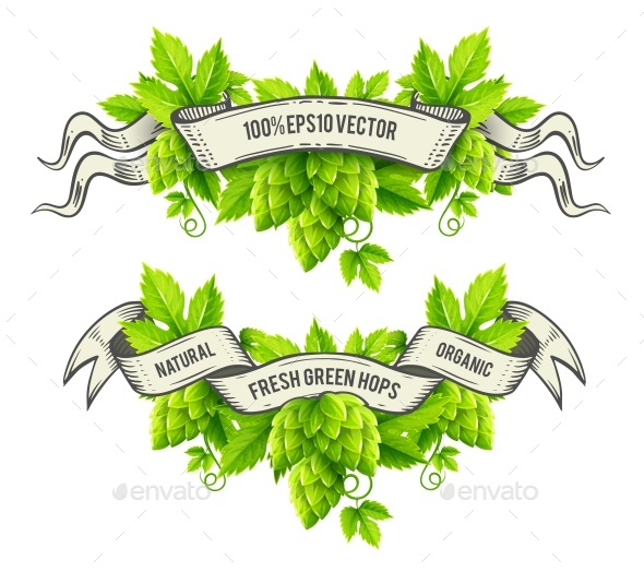 Fresh Hop Plants with Green Leaves and Ribbons - Decorative Symbols Decorative