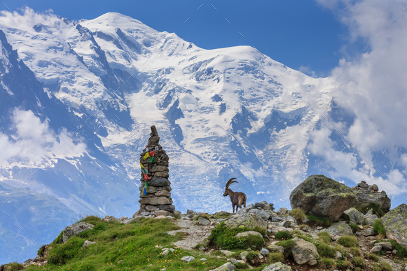 Ibex , Range of Mont-Blanc, French Alps - Stock Photo - Images