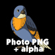 Blue Bird Came Flying - VideoHive Item for Sale