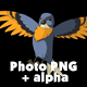 Blue Bird Came Flying and Flies Away - VideoHive Item for Sale