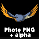 Blue Bird Flies. Back View - VideoHive Item for Sale