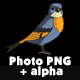 Blue Bird Jumping - VideoHive Item for Sale