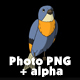 Blue Bird Sitting and Singing - VideoHive Item for Sale