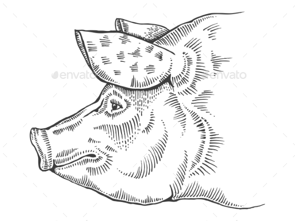 Pig Head Engraving Style Vector Illustration - Animals Characters