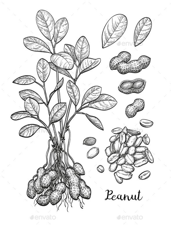 Peanut Set - Food Objects