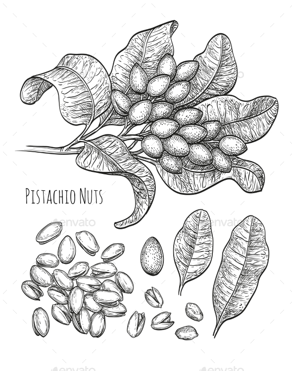 Pistachio Nuts Set - Food Objects
