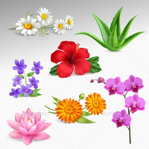 Flowers Plants Realistic Icons Collection - Flowers & Plants Nature