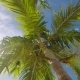 Palm Trees in the Wind - VideoHive Item for Sale