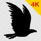 4K Bird Flying V2 - VideoHive Item for Sale