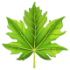 Green Maple Leaf - GraphicRiver Item for Sale