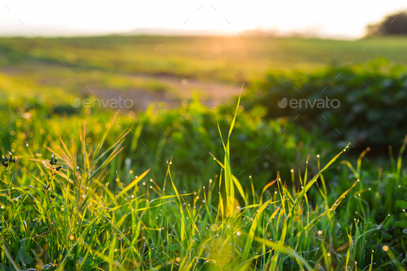 water drops on the green grass close up - Stock Photo - Images