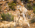 baby giraffe in Cape Town - PhotoDune Item for Sale
