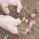 Farmer Examining Soil in Hands - VideoHive Item for Sale