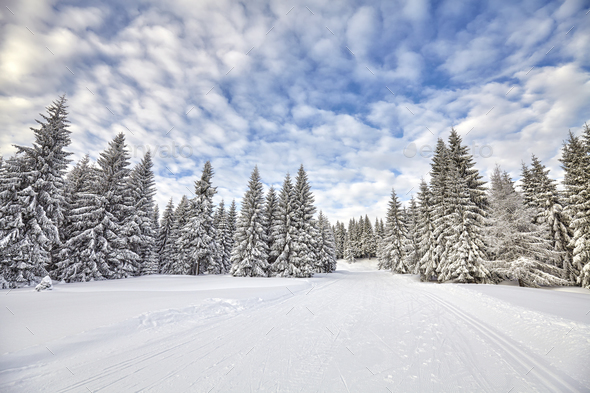 Winter landscape with cross-country skiing tracks. - Stock Photo - Images