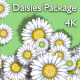 Daisies Package 4K - VideoHive Item for Sale