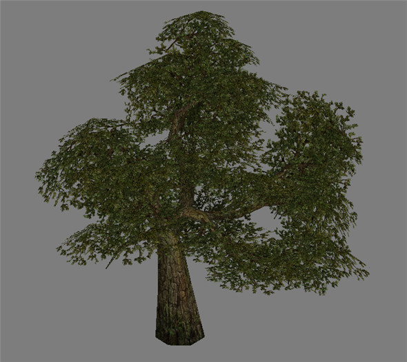 Model Arena game Jungle Area - Tree 01 - 3DOcean Item for Sale