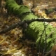 Old Tree with Moss Lying on the Ground - VideoHive Item for Sale