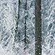 Passing Beautiful Winter Forest With Snow Falling - VideoHive Item for Sale