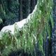 Ferns On Tree Trunk In Snowfall