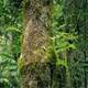 Passing Mossy Tree Trunks In Forest - VideoHive Item for Sale