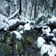 Moving Past River In Snowy Forest - VideoHive Item for Sale
