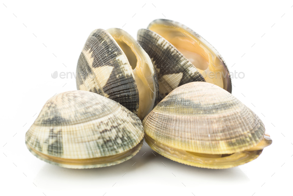 live clams isolated - Stock Photo - Images