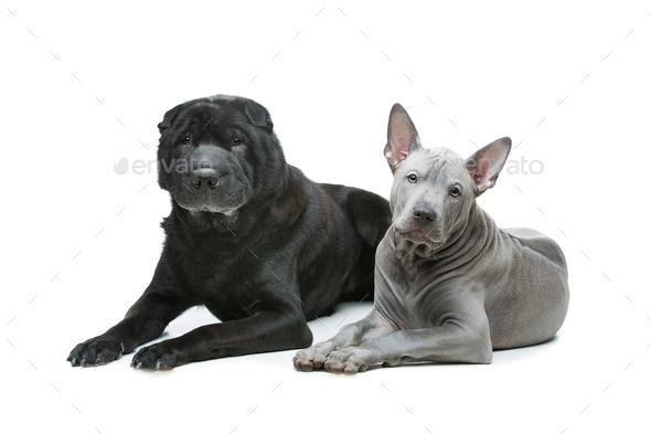 Beautiful dogs isolated on white background - Stock Photo - Images
