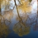 Trees Are Reflected in the Water. - VideoHive Item for Sale