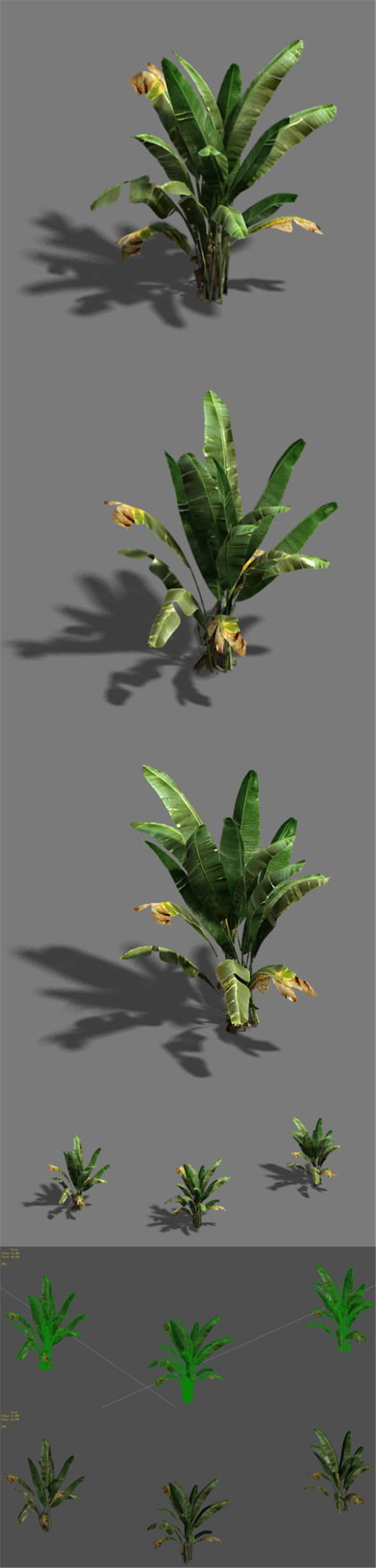 Trees - banana trees - 3DOcean Item for Sale