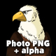 Bald Eagle Sits and Looks Around - VideoHive Item for Sale