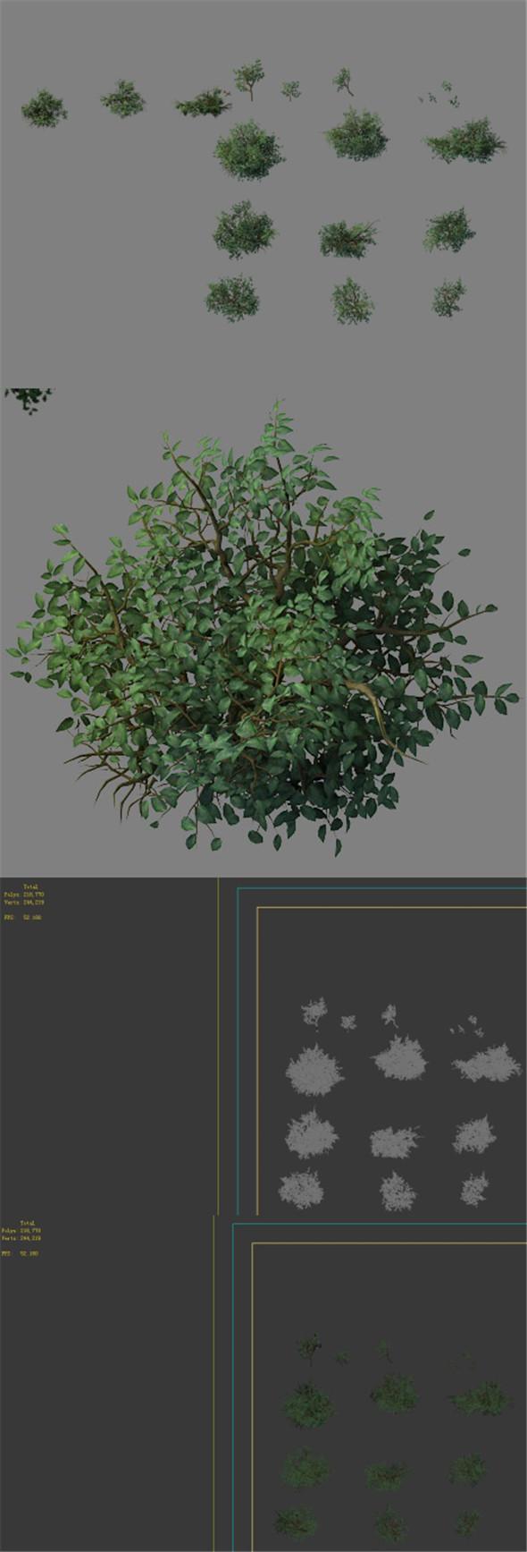 Wild plants - flowers 05 - 3DOcean Item for Sale