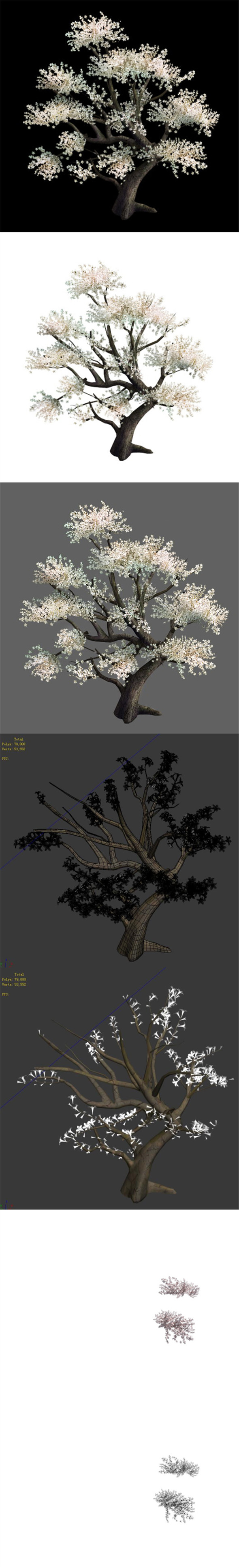 Plant - Whitewood Tree - 3DOcean Item for Sale