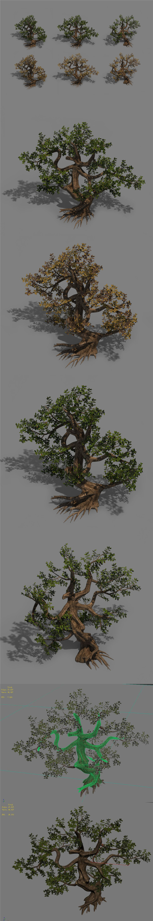 Plant - cypress - 3DOcean Item for Sale