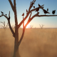 Tree and Birds - VideoHive Item for Sale