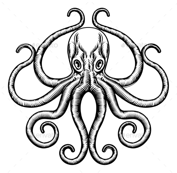 Octopus or Squid Illustration - Animals Characters