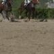 of Horse Racing