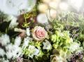 Fresh Roses Flowers Arrangement Decorative - PhotoDune Item for Sale