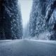 Moving Across Forest Road In Snowfall - VideoHive Item for Sale