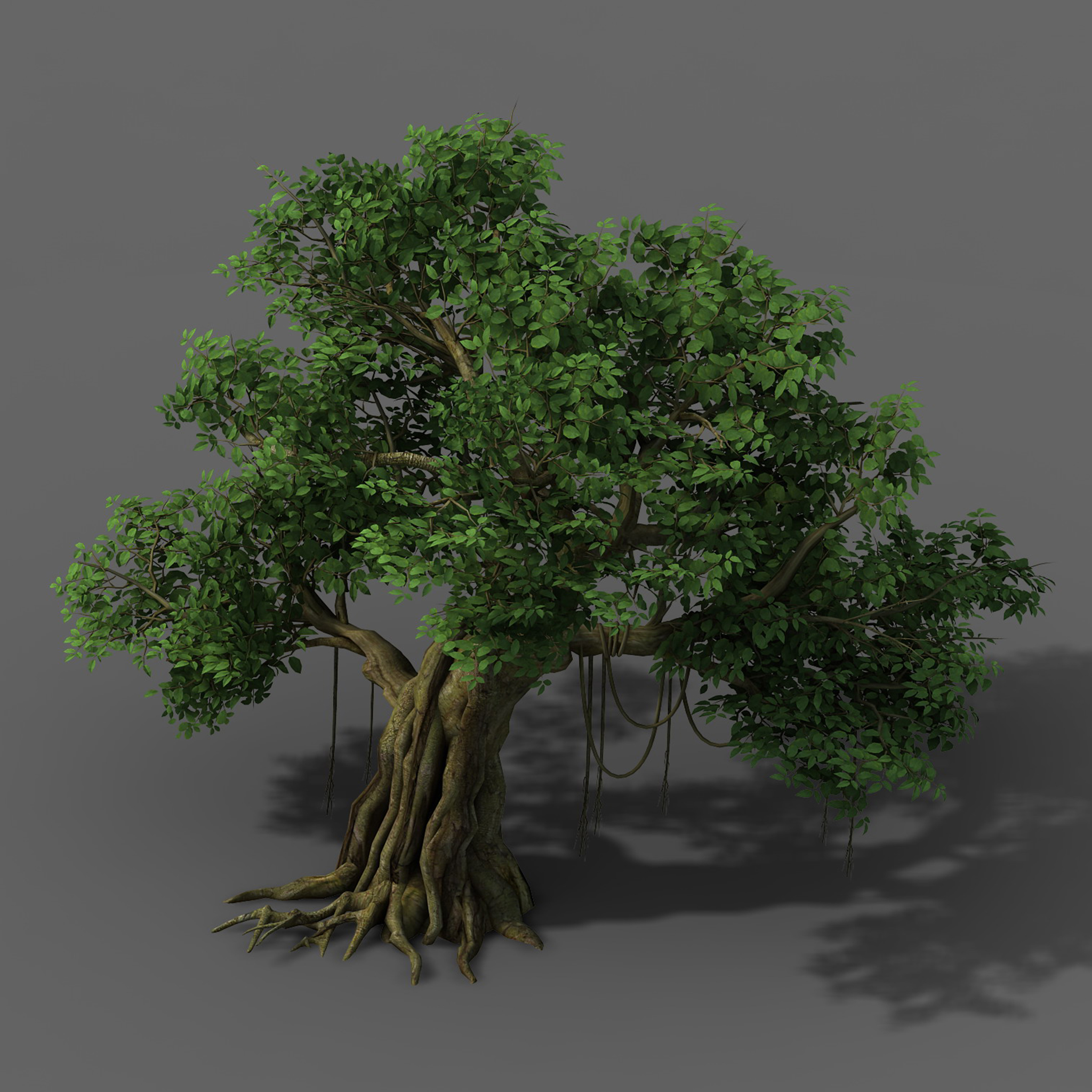 Plant - banyan tree 01
