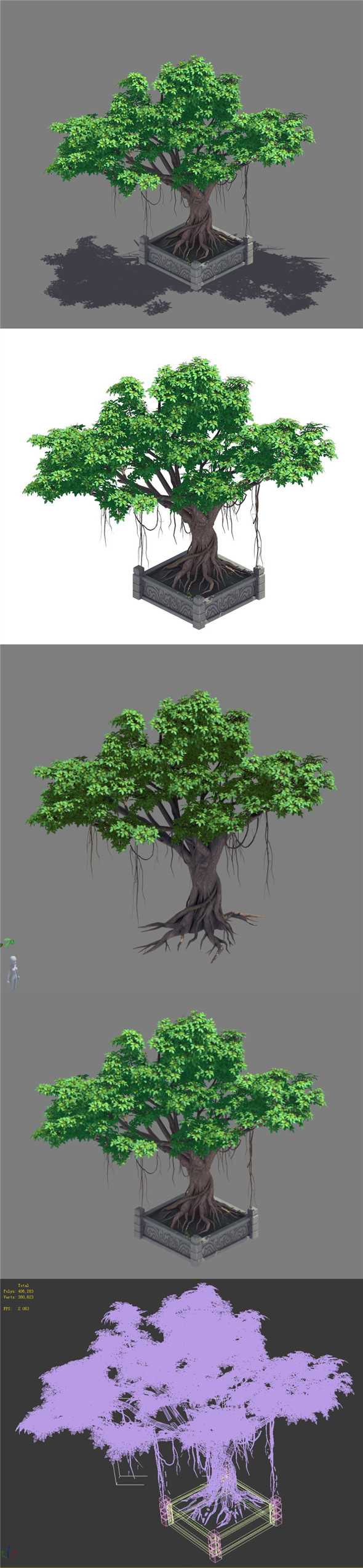 Plant - banyan tree 15 - 3DOcean Item for Sale