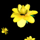 Rain of Yellow Flowers - VideoHive Item for Sale