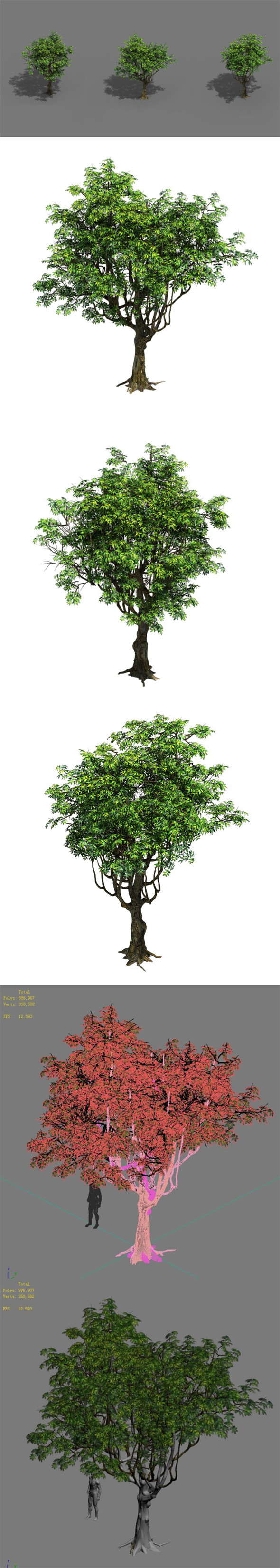 Plant - Tree 18 - 3DOcean Item for Sale