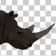 3D Rhino Walking - VideoHive Item for Sale