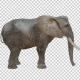 Realistic 3D Elephant - VideoHive Item for Sale