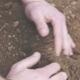Farmer Holding Pile of Soil in Hands Examining before Planting Grain