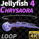 Jellyfish Chrysaora 4 - VideoHive Item for Sale
